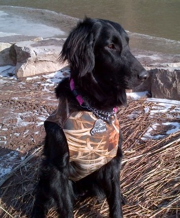 Flora with her cool camo vest to keep burrs off her beautiful coat.